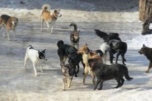Бробячие собаки.jpg